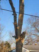 Tree care should often be left to the professionals who are trained to deal with dangerous scenarios such as nearby power lines. Contributed photo